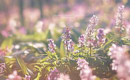 Fotografie - Romantická - 8039172_