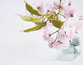 Fotografie - Sakura IV - 8035749_