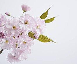 Fotografie - Sakura I - 8035779_