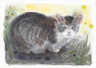 Obrazy - Mačka - akvarel - 8042174_
