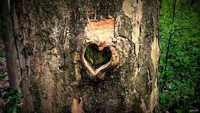 Fotografie - Srdce stromu - 8042116_