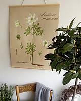 Obrázky - Retro botanický plagát - Anemone - 8039708_