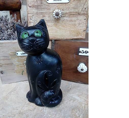 mačička vids