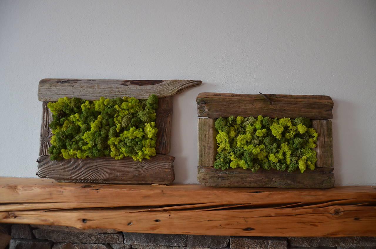 Islandský aranžérsky mach (jarná zelená)- Island moss