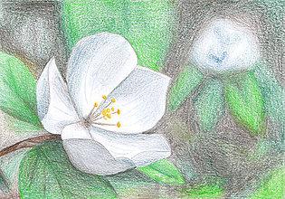 Kresby - Kvet, kreslená pohľadnica (1) - 8062018_