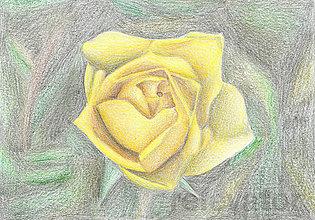 Kresby - Kvet, kreslená pohľadnica (2(ruža)) - 8062910_