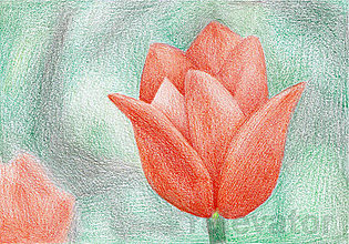Kresby - Kvet, kreslená pohľadnica (3(tulipán)) - 8064067_