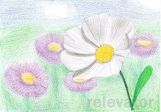 Kresby - Kvet, kreslená pohľadnica (4) - 8064330_