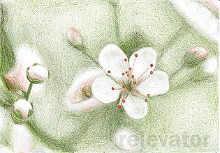 Kresby - Kvet, kreslená pohľadnica (5) - 8065321_