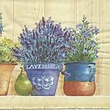 - levanduľa v kvetináči - 8068427_