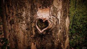 Fotografie - Srdce stromu - 8075900_