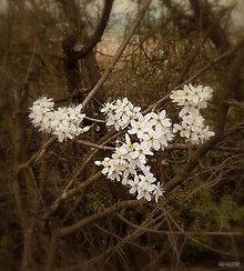 Grafika - Venček lesnej víly - 8080233_