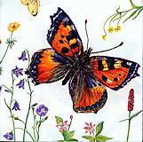- motýľ - 8078283_