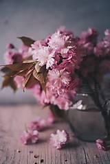Grafika - Japonská čerešňa_I - 8077973_