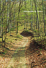 Fotografie - Autorská fotografia: Vediem ťa lesnou cestičkou - 8083462_
