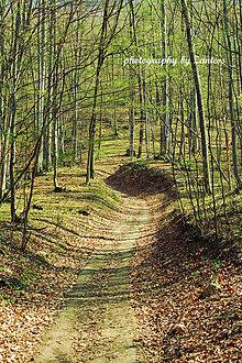 Fotografie - V-Fotografia: Vediem ťa lesnou cestičkou - 8083462_