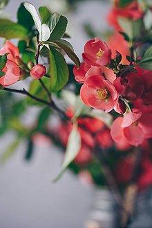 Grafika - Divá ruža - 8092971_