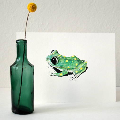 Žabka s bodkami - farebná