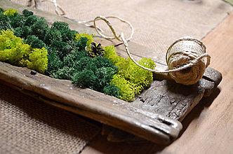Dekorácie - Živý obraz z machu - 8106532_