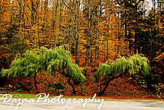Fotografie - Trees - 8108955_