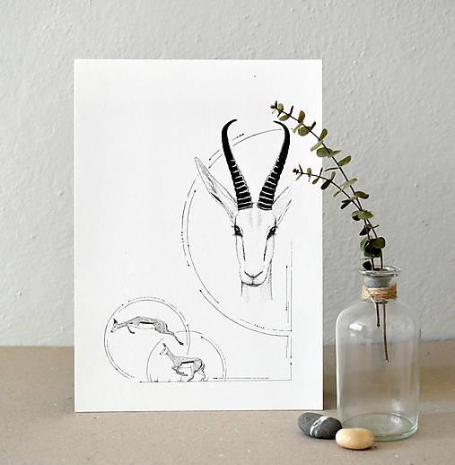 Antilopa v kruhu - A4