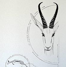 Kresby - Antilopa v kruhu - A4 - 8110089_