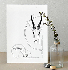 Kresby - Antilopa v kruhu - A4 - 8110092_