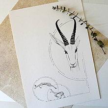 Kresby - Antilopa v kruhu - A3 - 8110998_