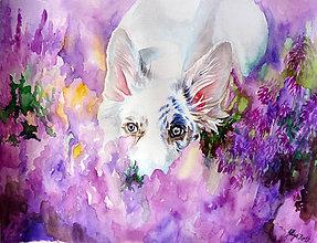 Obrazy - White in Lavender - 8127910_