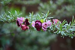 Ozdoby do vlasov - Anglické ruže - 8155441_
