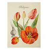 Obrazy - Maľovaný, zarámovaný obraz Tulipány - Tulipa, akvarel + ceruzka - 8156641_