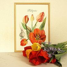 Obrazy - Maľovaný, zarámovaný obraz Tulipány - Tulipa, akvarel + ceruzka - 8156620_