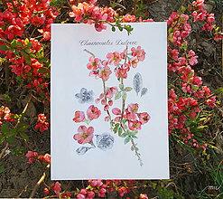 Obrazy - Maľovaný, zarámovaný obraz Dulovec - Chaenomeles, akvarel + ceruzka - 8156713_