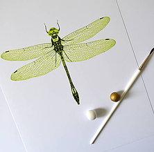 Kresby - Vážka - zelená (A4) - 8156880_