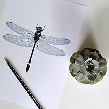 Kresby - Vážka - modrá (A4) - 8157314_