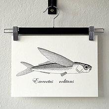 Kresby - Lietajúci ryba - (A4) - 8157376_