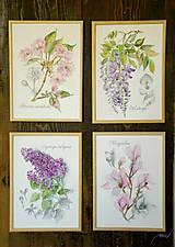 Obrazy - Maľovaný, zarámovaný obraz Prunus - japonská čerešňa, akvarel + ceruzka - 8165558_