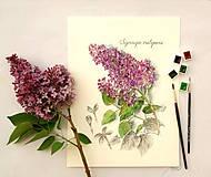 - Maľovaný, zarámovaný obraz Syringa - Orgován , akvarel + cer - 8166847_