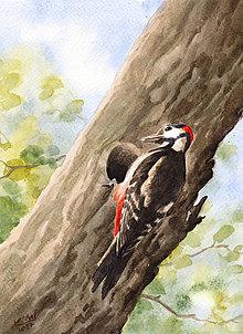 Obrazy - Ďateľ - akvarel - 8170235_