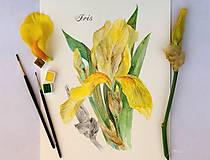 Obrazy - Maľovaný, zarámovaný obraz Kosatec - Iris, akvarel + ceruzka - 8168707_