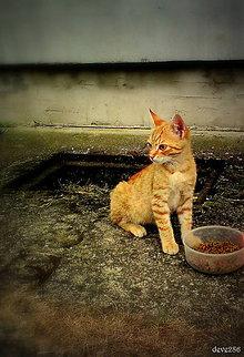 Fotografie - Braček - 8176452_