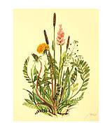- Maľovaný, zarámovaný obraz lúčne kvety, akvarel - 8183380_