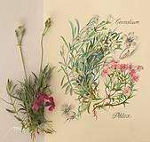 Obrazy - Maľovaný, zarámovaný obraz Flox a Rožec, akvarel a ceruzka - 8183418_