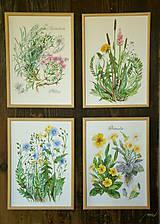 Obrazy - Maľovaný, zarámovaný obraz Flox a Rožec, akvarel a ceruzka - 8183420_