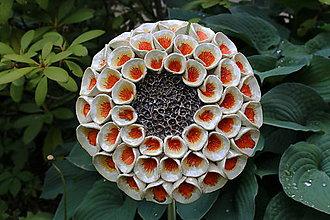 Dekorácie - Kvet do záhrady - 8193376_