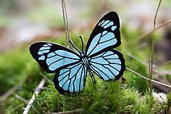 Odznaky/Brošne - Motýlek iceland blue/black - 8201278_