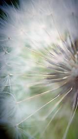 Fotografie - Púpava - 8203160_