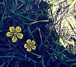 Fotografie - V modrej tráve - 8230174_