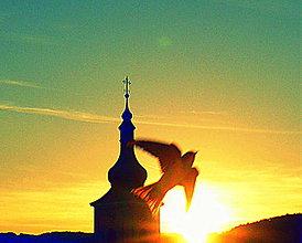Fotografie - Lastovička - 8230242_