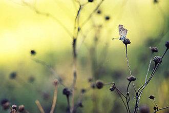 Fotografie - Motýl - 8244131_